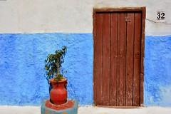 Le 32 de la mdina de Rabat (Olivier Simard Photographie) Tags: street door blue sun plant architecture plante soleil alley rust northafrica bleu pot ficus morocco maroc maghreb pottery medina porte ruelle cracks rue 32 rabat poterie riad rouille fissures mdina afriquedunord