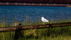 Presque Isle Park (Bohao Zhao) Tags: marquette michigan unitedstates us