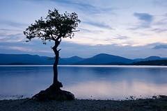 _DSC3066 (SFTPhotography) Tags: loch lomond scotland lochlomond treetreelone treemillorachy bay