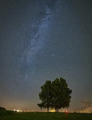 Dutch milky way (tms\) Tags: markermeer milkyway stars tree netherlands perseid