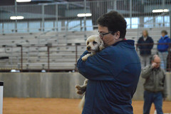 agility258 (jaimekay16) Tags: dog training austin agility k9 xpress nadac k9x