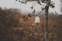 Galicia en estado puro. (JoseReboreda) Tags: winter white black cold tree blanco fog pine forest arbol 50mm nikon negro bosque invierno f18 pino niebla frio d600 nikond600