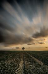 Into the distance (grbush) Tags: longexposure sunset sky tree nature field rural landscape countryside track farm bedfordshire minimalism minimalist lonetree swineshead tokinaatx116prodxaf1116mmf28 sonyslta77