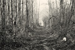 ---_0263 (Alksnyte) Tags: trees bw analog forest spring belgium pentax takumar smc vlaanderen kodak400tx bosberg