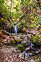 Tip Toe Falls (www78) Tags: california park waterfall toe state falls tip redwoods palo alto portola