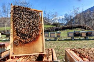 bee yard on the Alps