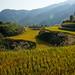 Dazhai - Longsheng Rice Terraces (Dragon's Backbone) 4