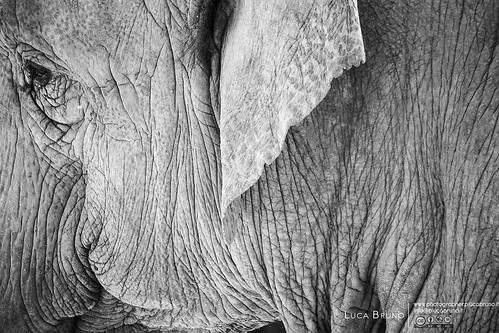 """Elephantness • <a style=""""font-size:0.8em;"""" href=""""http://www.flickr.com/photos/49106436@N00/16913282431/"""" target=""""_blank"""">View on Flickr</a>"""