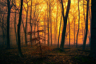 Abends im Wald