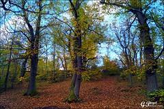 PALETTE DE COULEURS D'AUTOMNE (Gilles Poyet photographies) Tags: nature automne arbres soe fort auvergne beaumont puydedme autofocus sousbois lachtaigneraie aplusphoto artofimages