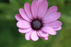 Before (Hng Nguyn Photo - Tel: 0937 067 804) Tags: flower macro beautiful niceflower hungnguyen hungnguyenphtoto