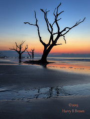 Good Morning From Bull Island (HarryB101) Tags: ocean sea nature water sunrise canon adobephotoshop natural southcarolina easternshore southeast canoneos eastcoast bullisland autofocus charlestonsouthcarolina naturalwater adobelightroom southeastcoast oceansunrise caperomain scenicbeaches topazlabs wildlifepreserves canoneos6d southcarolinabeaches topazdenoise promotecontrol scenicsouthcarolina