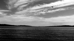 (ankhes) Tags: chile landscape mar paisaje ave cielo sur isla puro limpio chiloe tradicion ancud