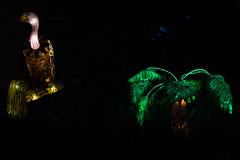 _DSC9653_2 (Elii D.) Tags: light fish flower animal night zoo monkey neon dragons lantern lampion dargon