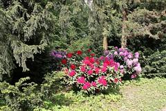 May 26 - One Year Ago... (Esther Spektor - Thanks for 10+ millions views..) Tags: sunlight tree canon spring bush shadows blossom may foliage bloom shrub bough estherspektor