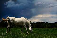 Better Hurry Storm's Comin' (Chamblin1) Tags: horse clouds pasture stormysky