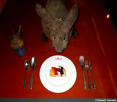 Dr. Takeshi Yamada and Seara (Coney Island Sea Rabbit) at Ichiumi Japanese buffet restaurant in Manhattan, NY on June 30, 2016.  20160630Thu DSCN7206=p3535CC. cake (Phyllo pastry with triple fruits topping) (searabbits23) Tags: ny newyork sexy celebrity art hat fashion animal brooklyn asian coneyisland japanese star tv google king artist dragon god vampire famous gothic goth uma ufo pop taxidermy vogue cnn tuxedo bikini tophat unitednations playboy entertainer oddities genius donaldtrump mermaid amc mardigras salvadordali performer unicorn billclinton hillaryclinton billgates aol vangogh curiosities sideshow jeffkoons globalwarming mart magician takashimurakami pablopicasso steampunk damienhirst cryptozoology freakshow leonardodavinci seara immortalized takeshiyamada roguetaxidermy searabbit barrackobama ladygaga climategate