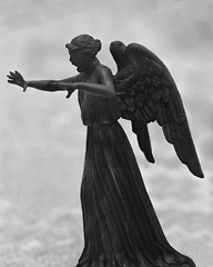 the worlds best photos of weepingangel flickr hive mind