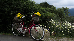 Flower bike (Inge Brattaas) Tags: old flowers bike basket decoration