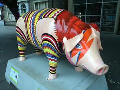 Piggy Stardust in Ipswich (Ian Press Photography) Tags: wild sculpture art st piggy pig suffolk elizabeth hospice gone pigs sculptures stardust ipswich wild pigs