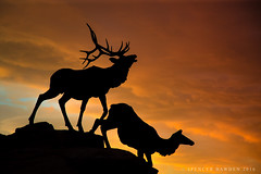 The King of the Mountain (Explored) (Spencer Bawden Photography) Tags: park sunset walter art silhouette statue museum bronze photography cow hole wildlife hunting bart grand bull jackson antlers trail national wyoming elk spencer teton hunt wapiti hunters antler bawden spazoto