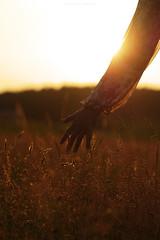 (esmeecadoni) Tags: light sunset sky people sun sunlight flower holland nature netherlands silhouette backlight landscape photography spring hands europe sundown bokeh outdoor sony minimal simplicity simple minimalistic drenthe littlethings beautifulearth