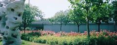 Guang'anmen Beibinhe Lu (1) (Matthew Huntbach) Tags: flowers beijing panoramic widepic kodakportra160 xibianmen guanganmen guanganmenbeibinhelu