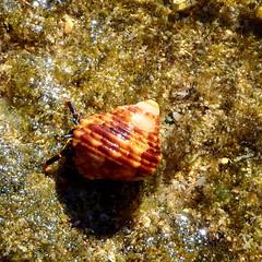 Beach Hanalei - V (Anders Magnusson) Tags: beach hawaii kauai hanalei andersmagnusson