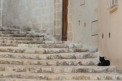 """Keep calm e fatti le scale (Valentina R. """"tillo980"""") Tags: matera gatto blackcat scala 2019 cultura sassidimatera caveoso vicoli alleys basilicata lucania"""