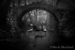 Falling Dream (micahmoreland) Tags: old uk bridge england fall stone forest fly woods surrealism dream surreal levitation illusion