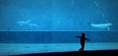 Genova.  Acquario. (gianfranco.meano.Very busy.) Tags: genova acquariodigenova pesci pesce delfino delfini acquario bambino bambini