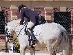 DSC06036 (Luca Velasco Fotografa Equina) Tags: horses horse rider equestrian equine horseriding cdi cdn horsemanship dressage
