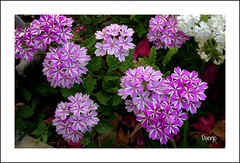 Primavera (Doenjo) Tags: flores andaluca doenjo