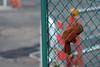 ここにおります。 (Yorozuna Yūri / 萬名 游鯏(ヨロズナ)) Tags: brown fence tokyo glove 新宿区 茶色 東京都 落し物 フェンス 手袋 lostarticle 金網 柵 shinjukuward 忘れ物 ushigomeyanagicho 牛込柳町 置きづかい pentaxautotakumar55mmf18