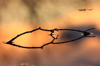 A Twig Reflection