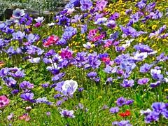 Les fleurs (apolloniacyclade) Tags: pink flowers red green nature colors rose yellow fleurs jaune garden rouge couleurs violet jardin vert