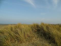 Playtime at the beach - 19.03.2015............  #Play #Fun #Happy #Dog #Pet #Pup #Pooch #Canine #K9 #Splash #Water #Sea #Beach #Sand #Ball #Game #Malahide #Dublin #Ireland #Fingal #Spring #Photo #Flickr #Car #Travel #Transport #Capture #Contrast #Tone #Fa (Mel Byrne) Tags: travel family ireland sea dublin dog pet game love beach water car contrast ball fun happy photo spring sand friend flickr play transport canine pup splash capture pooch tone k9 malahide fingal