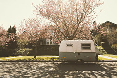 14/52 - Blossoms & a Boler (Pamela Saunders) Tags: vancouver vintage easter spring egg nostalgia cherryblossom trailer boler