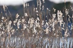 Str (Agnar Lavik) Tags: norway straws mlen