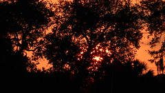 Florida Sunset (Jim Mullhaupt) Tags: pictures camera pink blue sunset red wallpaper sky orange sun color tree weather silhouette yellow clouds landscape photography gold evening photo nikon flickr sundown florida dusk snapshot picture palm exotic p900 tropical coolpix bradenton geographic endofday nikoncoolpixp900 coolpixp900 nikonp900 jimmullhaupt