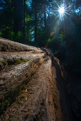 Fallen Giant (Travel by WestEndFoto) Tags: california travel usa forest us flickr unitedstates natural queue scape naturephotography landscapephotography orick agenre fother bsubject flickrjeffpj mfnikkor20mmf28ais flickrwestendfotoep flickrtravelbywestendfoto flickrtravelredwoodnationalpark