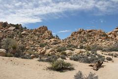 Joshua Tree NP, CA (vtpoly) Tags: california plants nationalpark rocks joshuatree trails polywoda