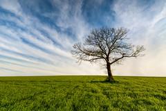 Alone (Lollivier Stphane) Tags: light sky tree alone bretagne tokina explore ciel fields rennes nisi d3200