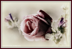 Rose Canvas Art (mariaminhota) Tags: flower macro art rose digitalart frame wildflowers 18200mm canonlens texturized canoneos70d rosesofmay mariaminhotaphotography