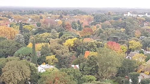 Los colores del Otoño #NoFilter  #Otoño #Autumn #Skyline #Arboles #Trees #BuenosAires #Argentina #IgersBuenosAires #IgersBsAs #IG_BuenosAires #IgersArgentina #IgersArg #IG_Argentina