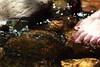 Sparkle (em_burk) Tags: canon arizona toenails foot toes red creek water wading mountgraham nooncreek riparian skyisland girl person rock sparkle toenailpolish pinaleños
