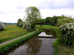 Year 2 May Caldon Canal (Alan FEO2) Tags: uk trees 2 england sky reflection male water clouds swimming landscape outdoors canal duck image blossom year trent same mallard months 12 footpath bushes staffordshire on 12monthsofthesameimage 2oef 2caldon canalstoke