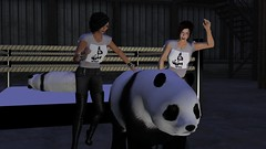 Wildlife Wrestling Federation (alexandriabrangwin) Tags: world silly animal computer dark walking 3d coach fight graphics funny panda wrestling champion away victory ring arena warehouse secondlife virtual violence exit tshirts awareness cheering wrestle federation celebrating wwf champ cgi cruelty raise wrasslin defeated mondybristol alexandriabrangwin