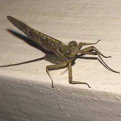 Efmera (javiblue25) Tags: naturaleza macro bicho insecto macrofotografa