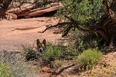 moab-141 (LuceroPhotos) Tags: utah jeeps moab cliffhanger jeeping